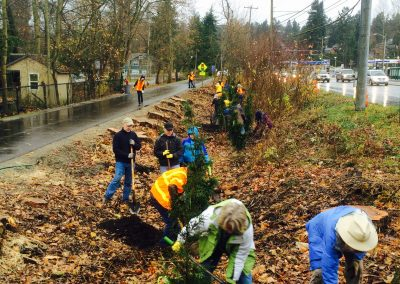 Tree Planting Event Along Burke-Gilman Trail